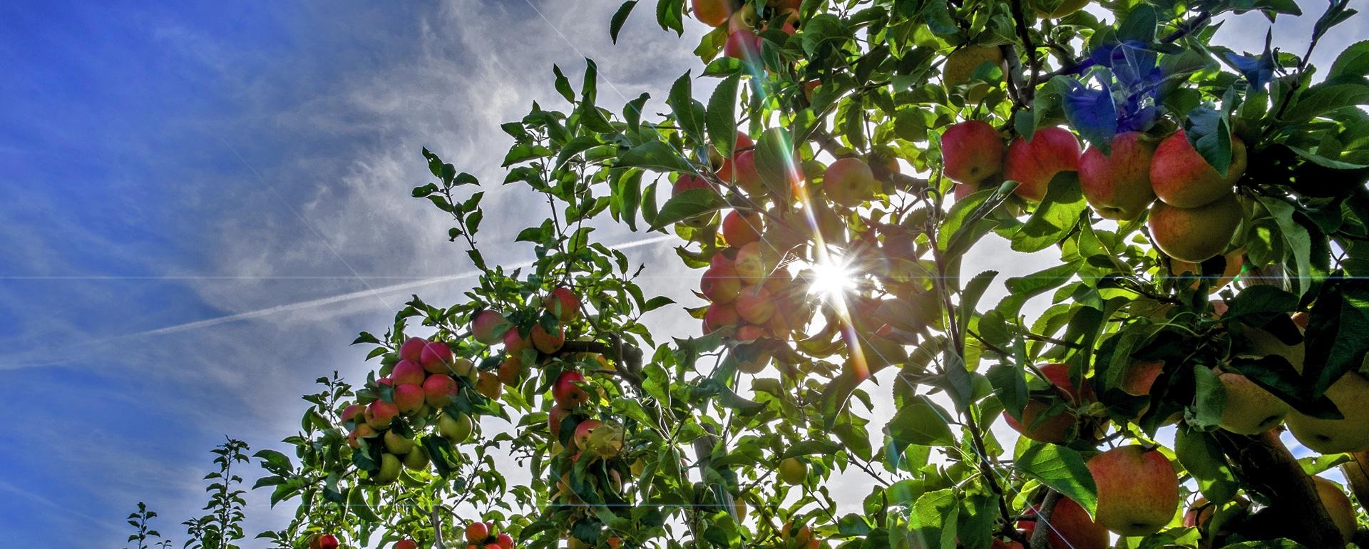 Wir lieben Äpfel!